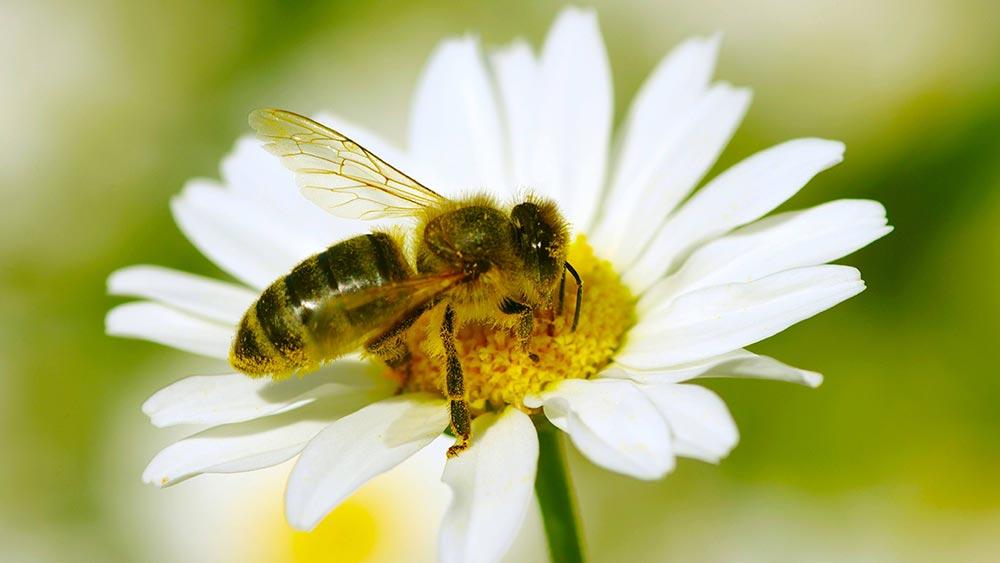 Alergija izazvana ubodom insekta